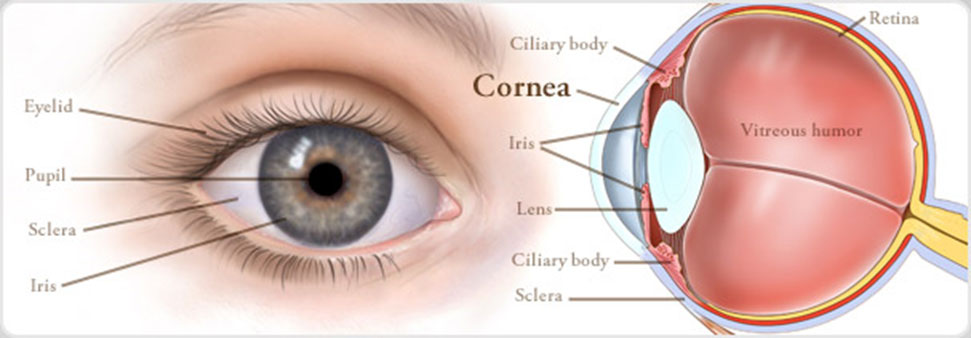 centre-for-sight-africa-best-eye-hospital-affordable-eye-care-treatment-surgery-in-nkpor-onitsha-anambra-state-nigeria-cornea